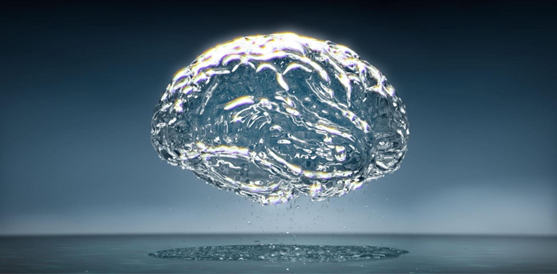 Water-brain